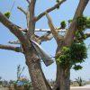 Tornado Tree Joplin