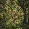 cool-wallpaper-forest-hawaii-38136